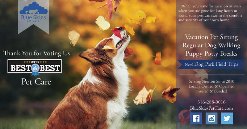 newton\u0027s best pet sitter \u0026 dog walker blue skies pet care