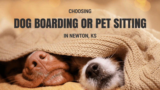 choosing pet sitting or dog boarding in newton, ks